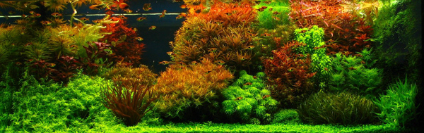 Aneka Jenis Aquascape | CAHAYA WAHYU